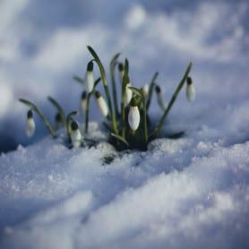 Fleur d'hiver - Parfum pour bougies