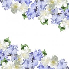 Iris jasmin - Parfum pour bougies