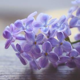 Lilas - Parfum pour bougies